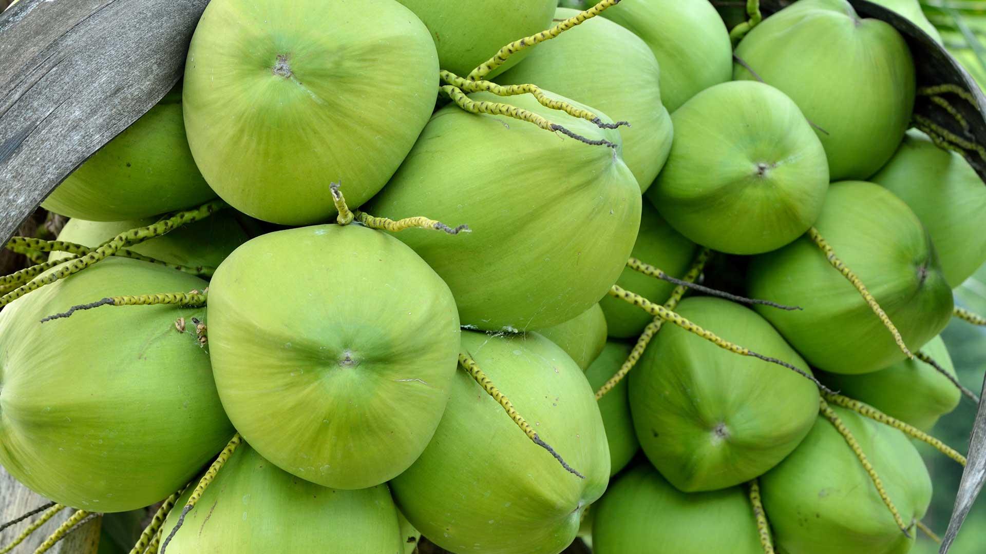 origin Genuine Coconut thailand coconuts